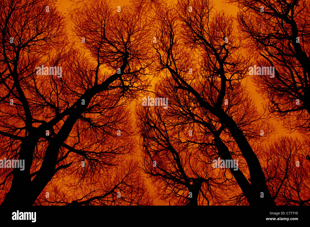 Abstraction in fiery colors Stock Photo