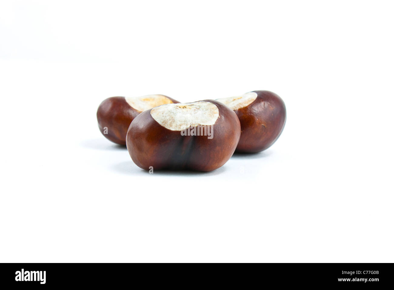 shot of 3 conkers on a white background - Stock Image