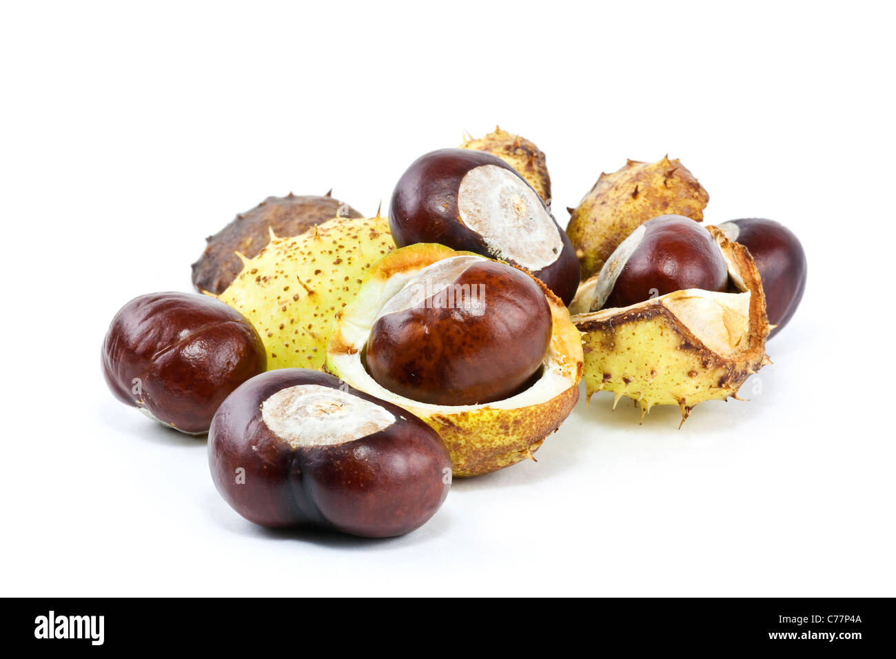 conkers and conker leaves and cases in the studio - Stock Image