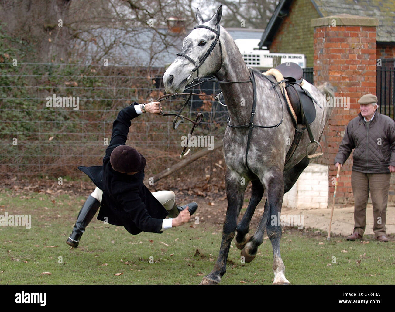 A member of the Chiddingfold , Leconfield and Cowdray Hunt is sent flying by his horse final day hunting 2005 - Stock Image