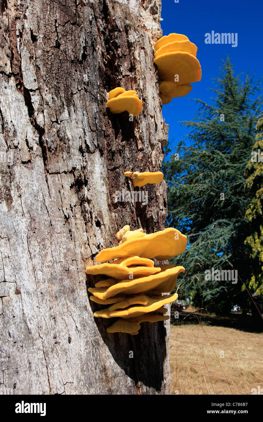 Wildlife tree. Saved for food, shelter and nesting. - Stock Image