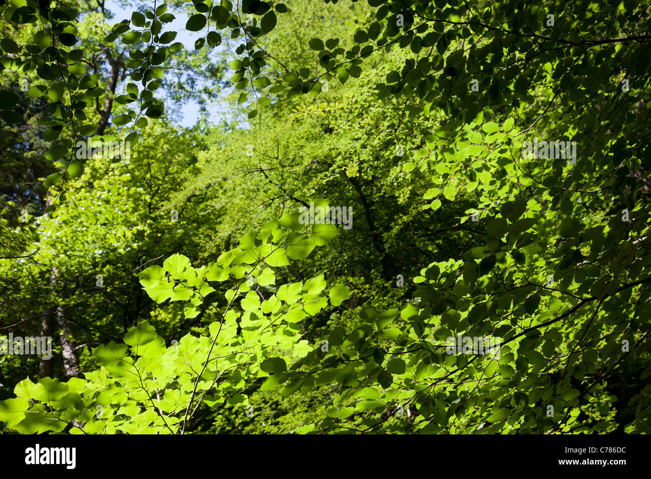 Green background of leaves and bushes - Stock Image