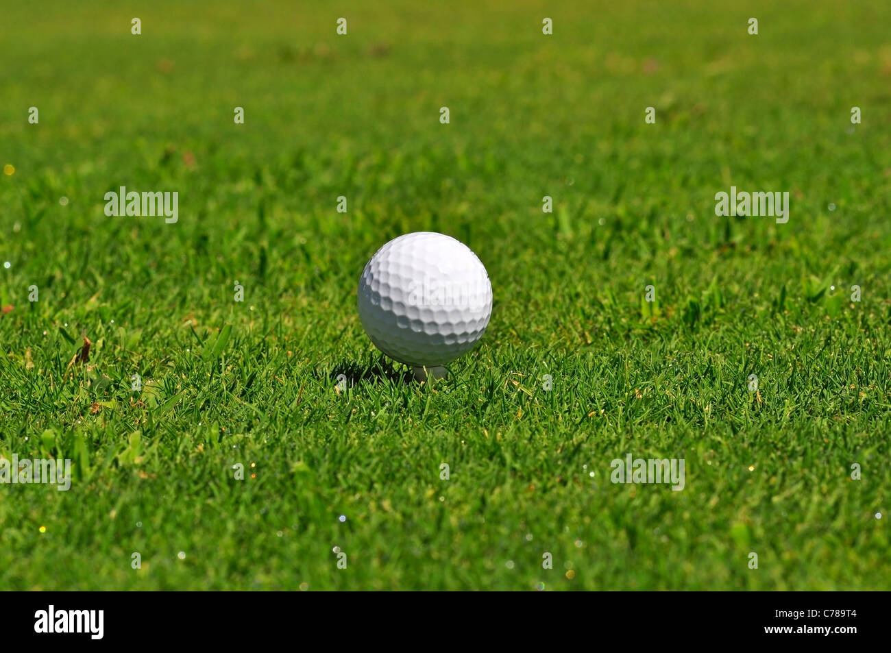 Golf ball on a real golf course green - Stock Image