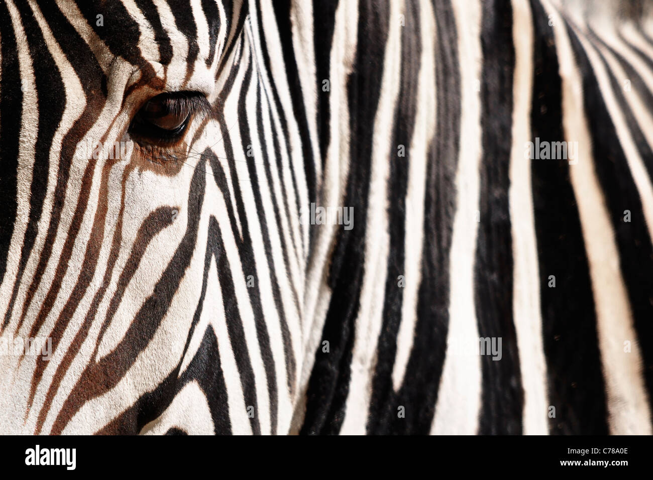 Detail of a Zebra, with low depth of field and focus on the eye - Stock Image
