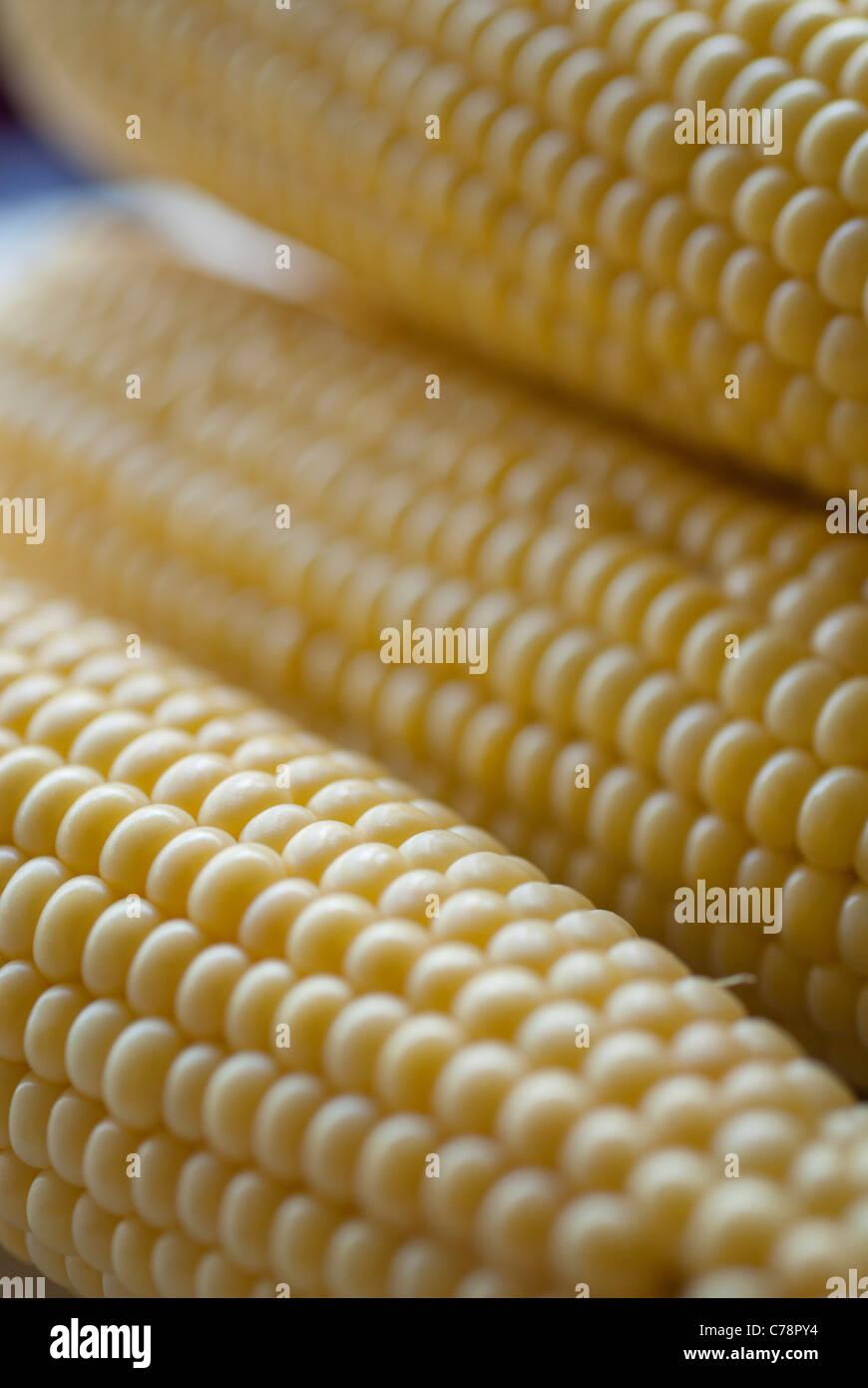 corn on a cob close-up - Stock Image