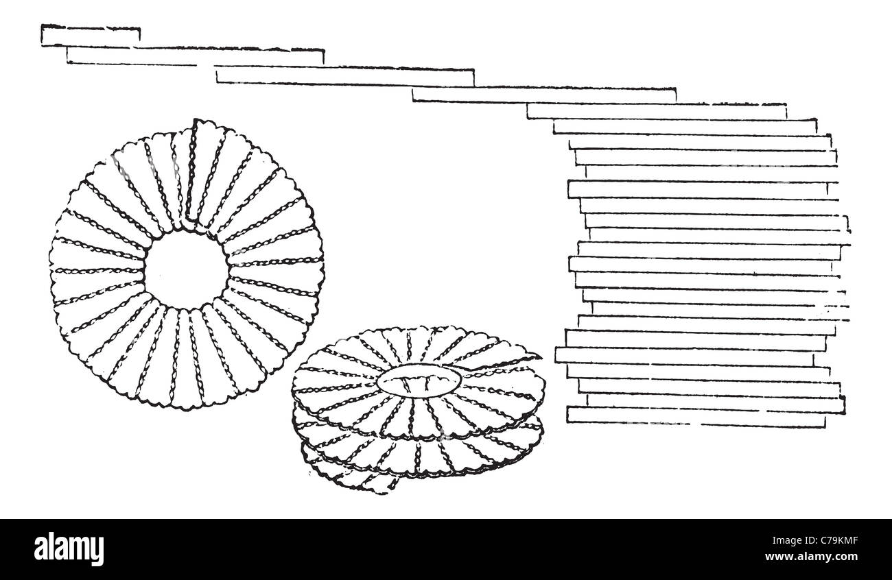 Diatoms - Bacillaria paxillifer (right) and Meridion vernale (left and center), magnified, vintage engraved illustration. Stock Photo