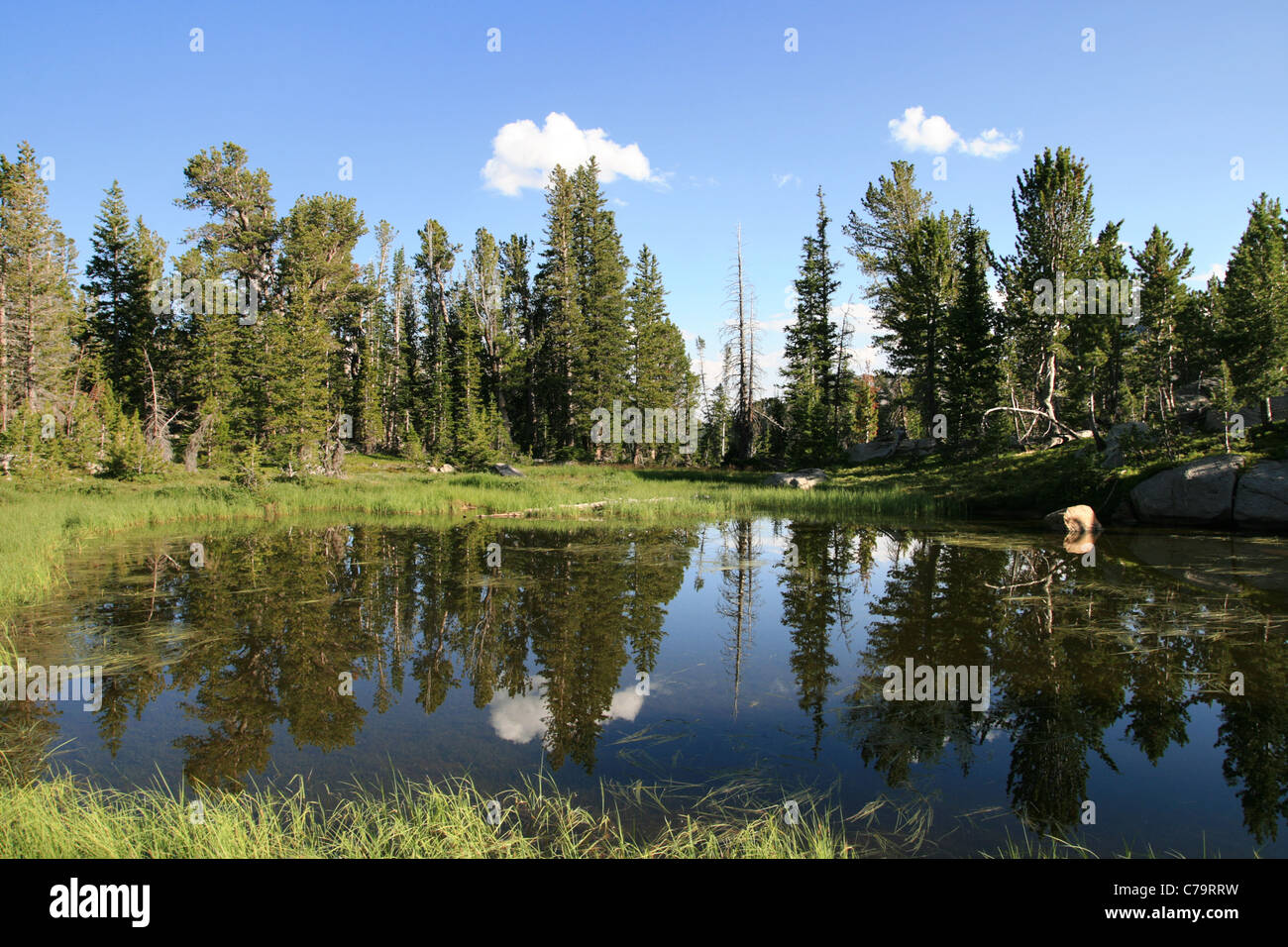 wilderness lake with reflection of pine trees - Stock Image