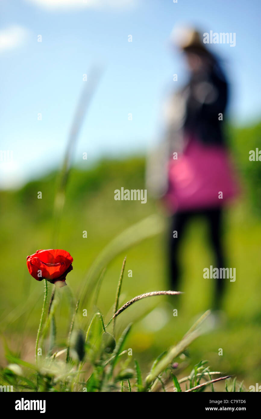 Summer's day walk in the Great British countryside - Stock Image