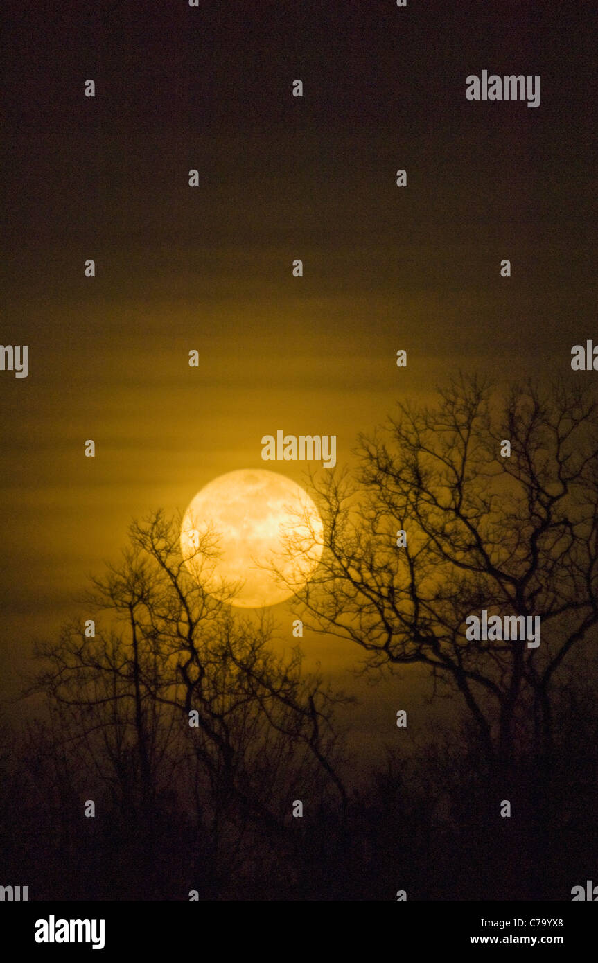 d4314fe982e68 Huge Moon Rise Stock Photos   Huge Moon Rise Stock Images - Alamy