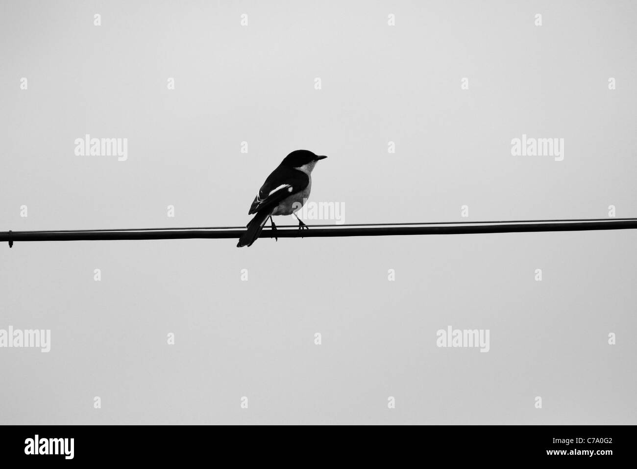 Telephone Wire Black and White Stock Photos & Images - Alamy