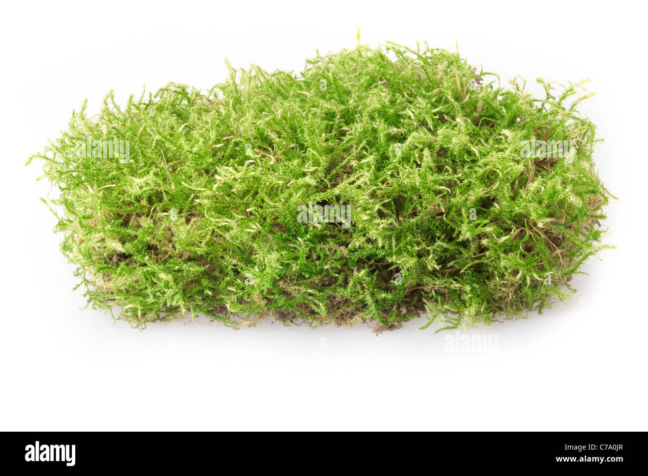Green moss - Stock Image