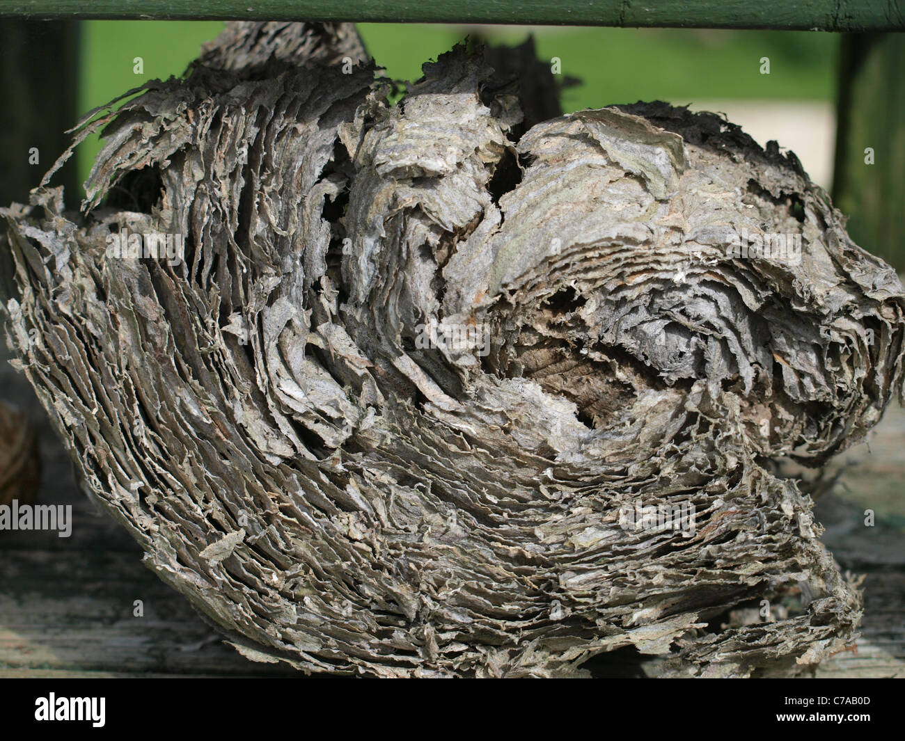 LAYERS UPON LAYERS (WASP NEST).this is a side profile of a VESPULA VULGARIS,or common wasps nest,multiple layers - Stock Image