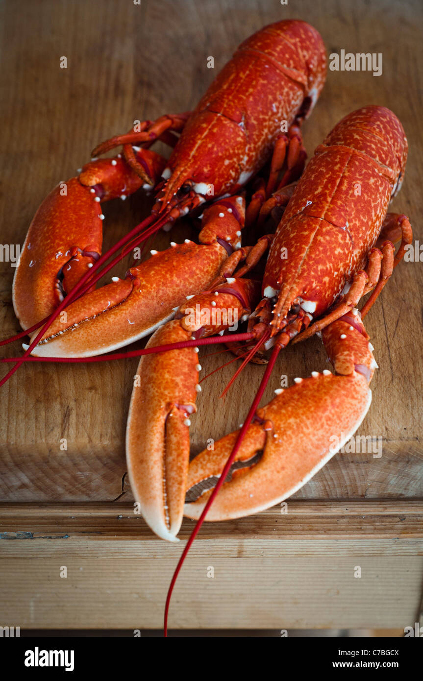 Lobster Stock Photos & Lobster Stock Images - Alamy