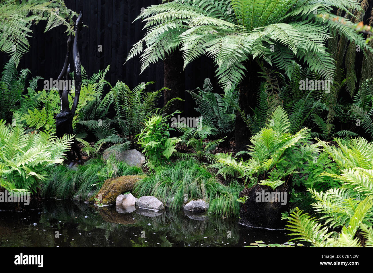 Fern Garden Mixed Shade Shady Loving Plants Beside Water Pool Pond Wet  Boggy Soil Tranquil Quite Relaxed Relaxing Environment