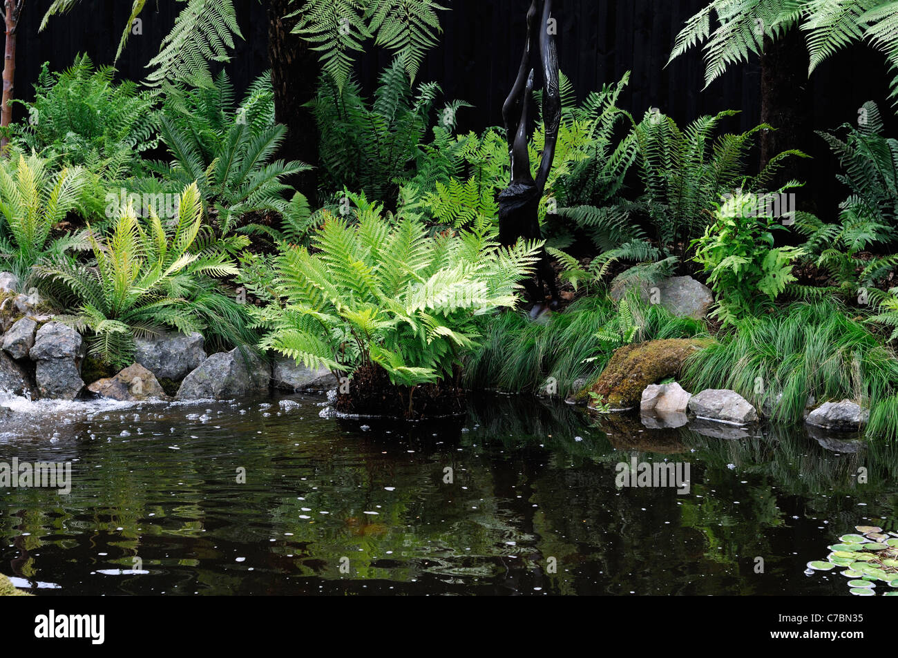 Fern Garden Mixed Shade Shady Loving Plants Beside Water Pool Pond Wet  Boggy Soil Tranquil Quite