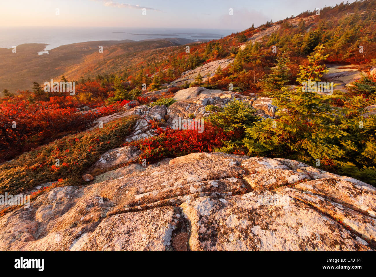 Fall color amidst granite bedrock on summit of Cadillac Mountain at