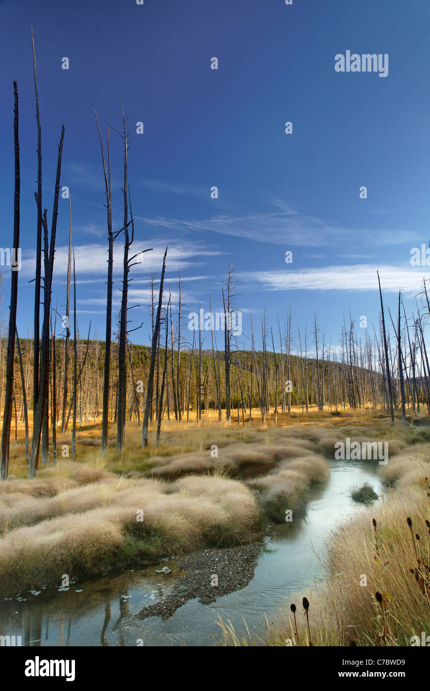Obsidian Creek flowing through a misty meadow and dead trees in autumn, Yellowstone National Park, Wyoming, USA - Stock Image