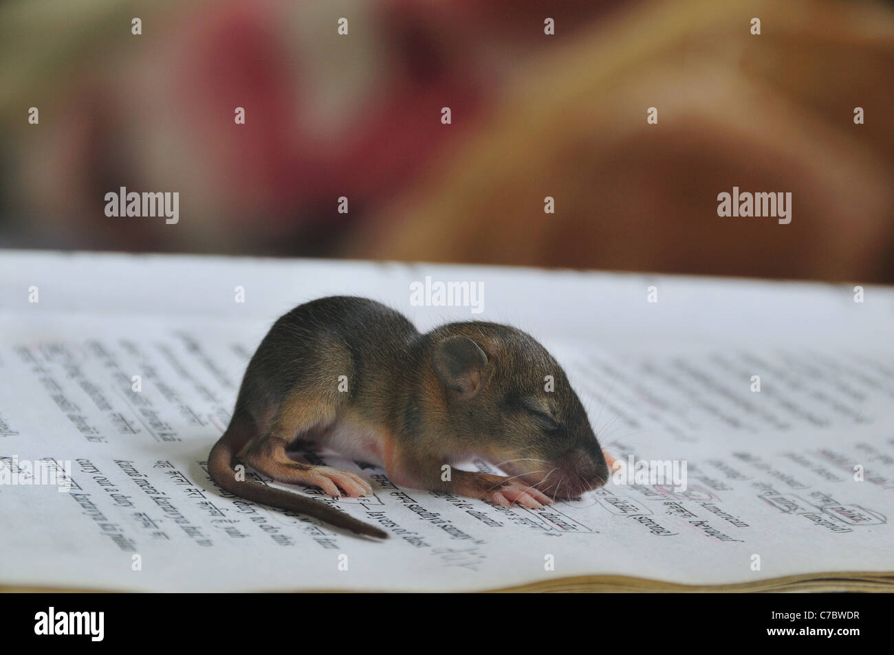 Baby Mole Stock Photo 38984787 Alamy
