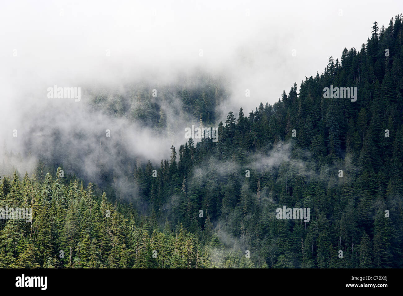 Clouds interspersed with old growth forested ridges, Mount Rainier National Park, Washington, USA - Stock Image