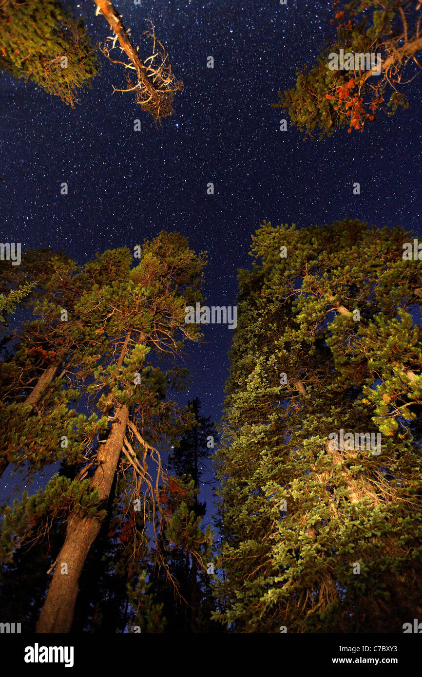 Stars above forest, Crater Lake National Park, Oregon, USA, North America - Stock Image