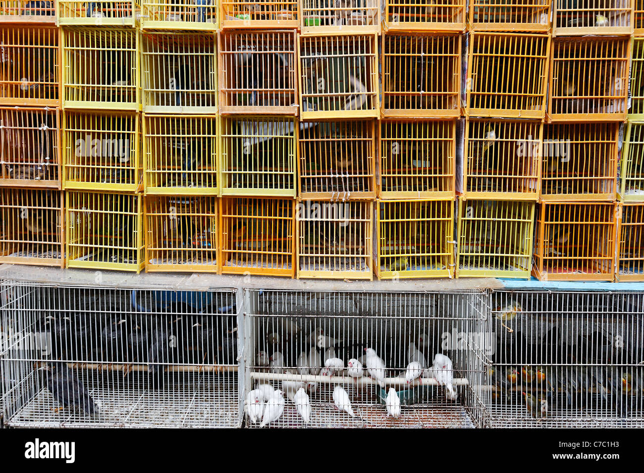 Songbirds in bird cages for sale in Yuen Po Street Bird Garden, Kowloon, Hong Kong SAR, People's Republic of - Stock Image