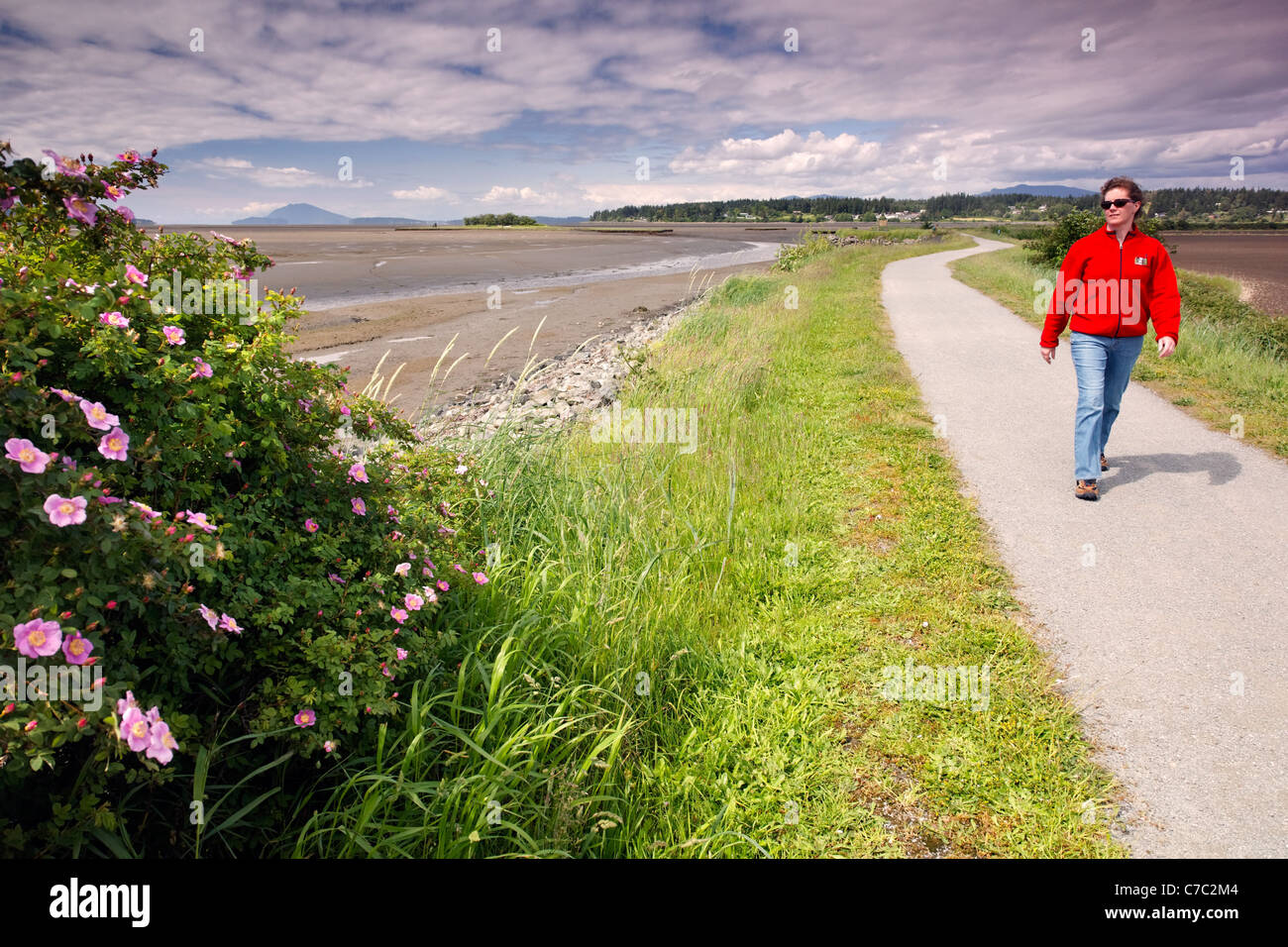 Woman walking on dike trail, Padilla Bay National Estuarine Research Reserve, Skagit County, Washington, USA - Stock Image