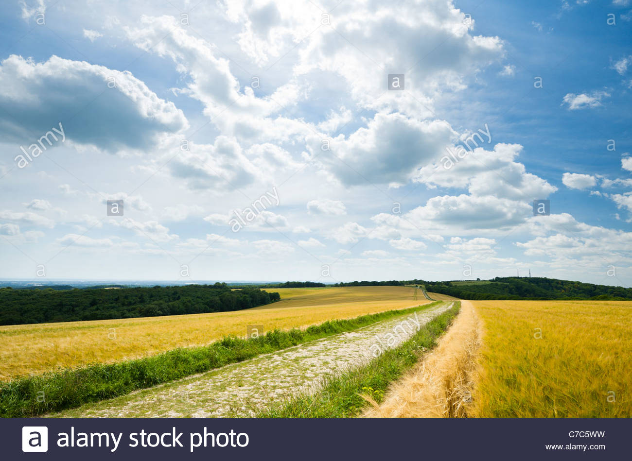 The South Downs Way at Bignor Hill - Stock Image