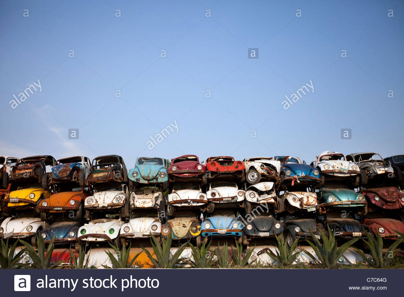Type Of Beetle Stock Photos & Type Of Beetle Stock Images