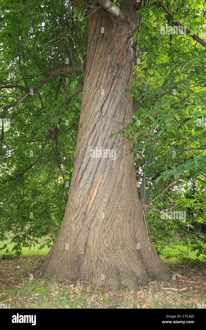 Tree With Twisted Trunk Stock Photos & Tree With Twisted Trunk Stock ...