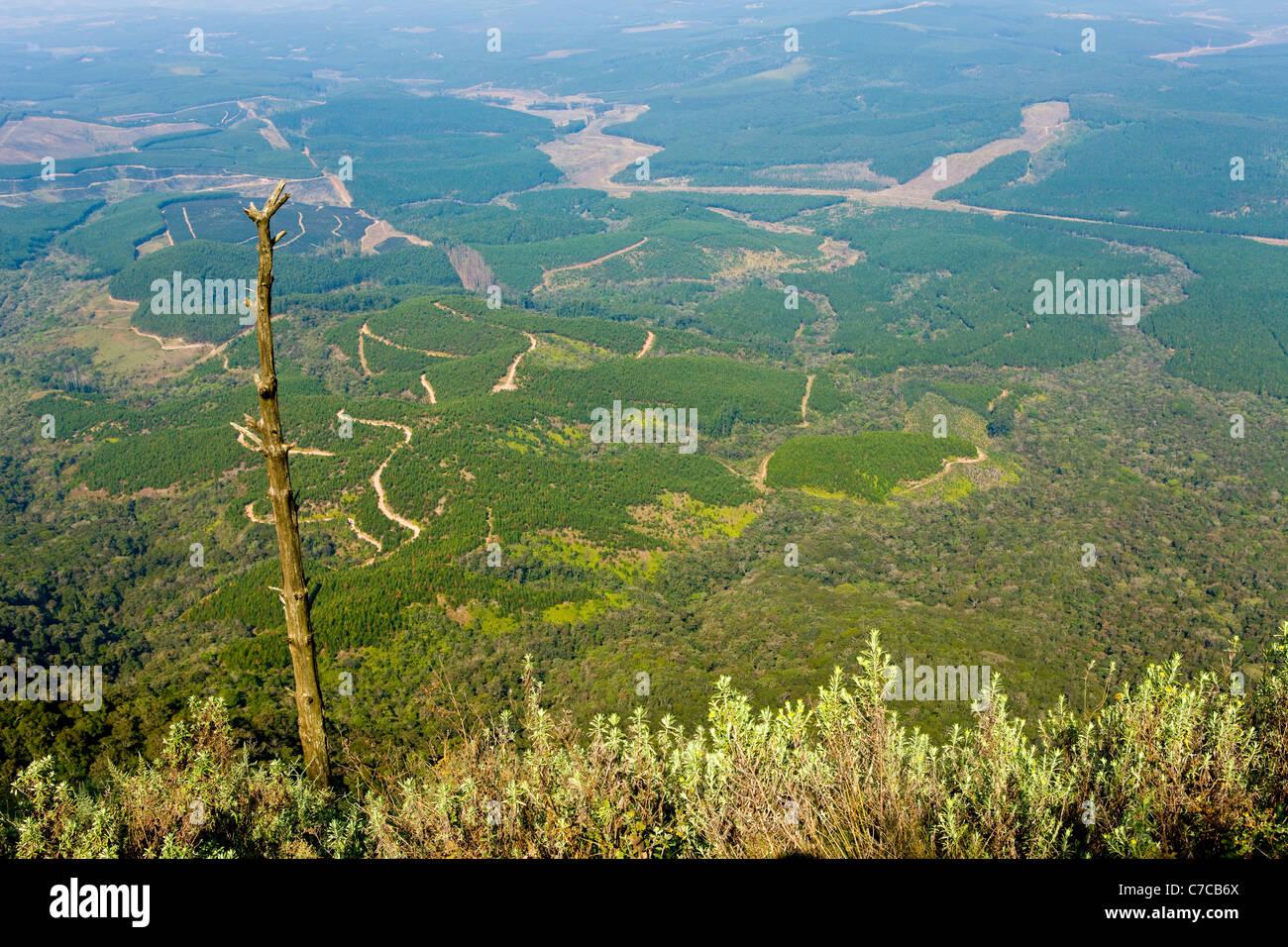 Wonder View Drakensberg of Transvaal Mpumalanga ( Transvaal ) South Africa - Stock Image