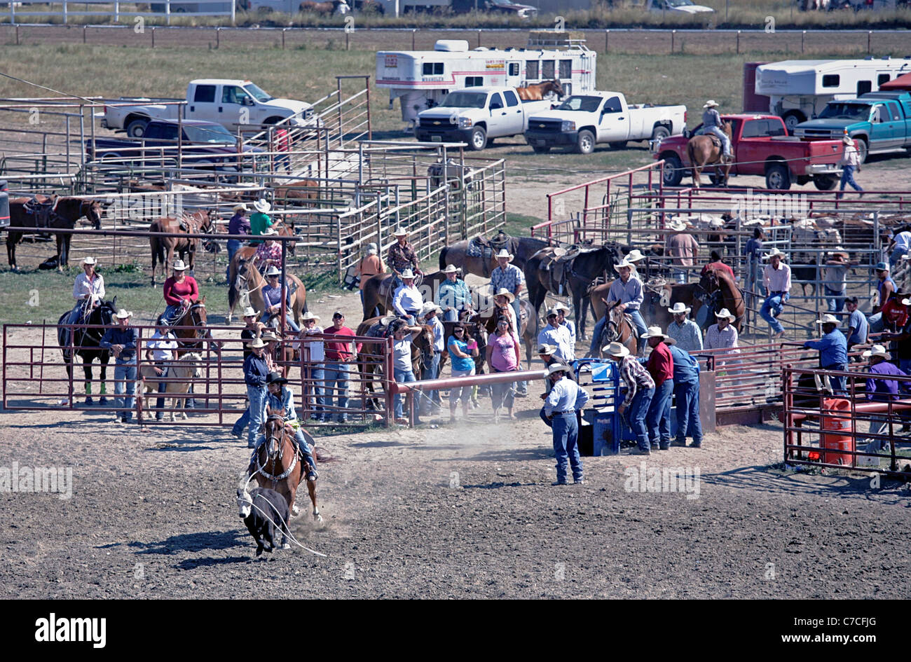Woman competing in the calf breakaway event during the rodeo held at the Crow Agency reservation in Montana - Stock Image