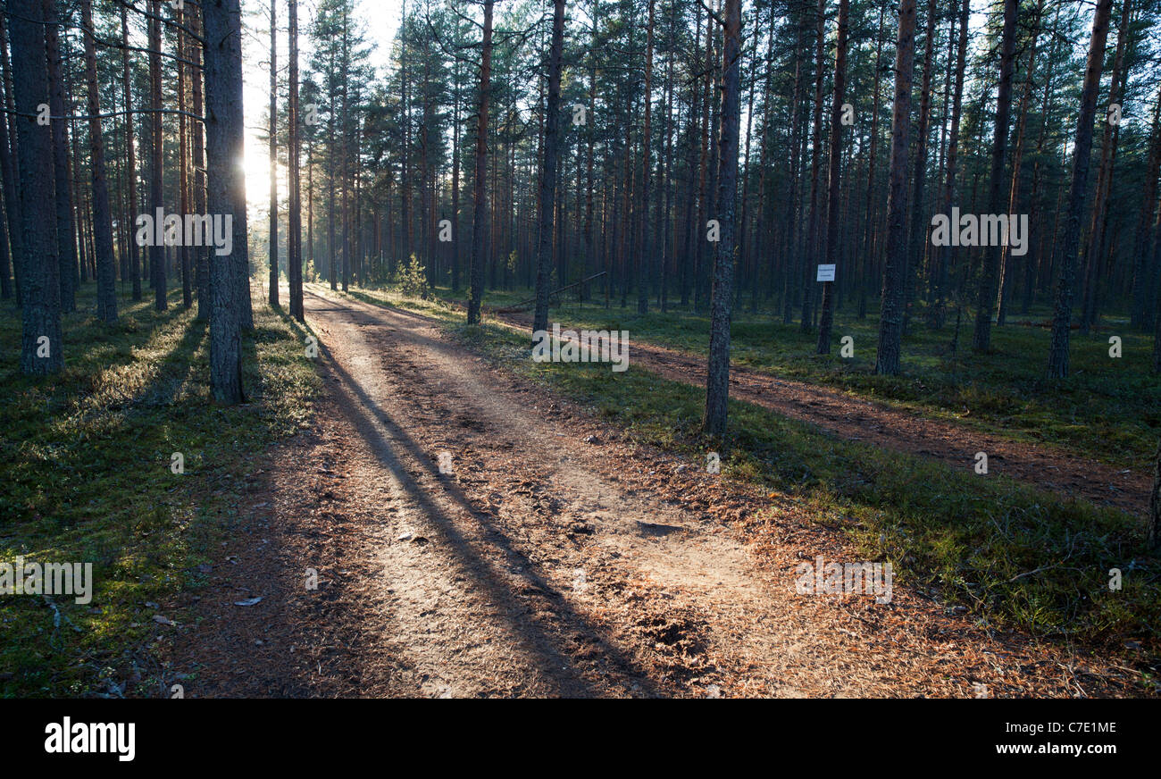 Road in forest at sunset , Finland - Stock Image