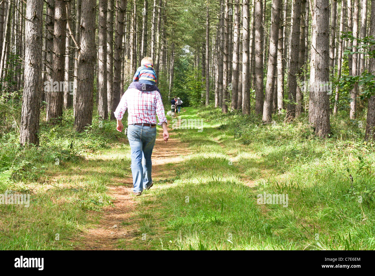Father and son walking in Suffolk woodland - Stock Image