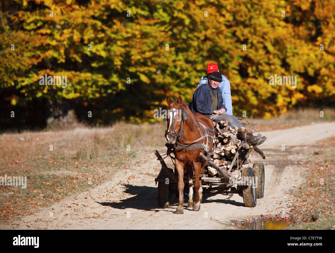 Gipsies in carriage near a beech forest in the autumn - Stock Image