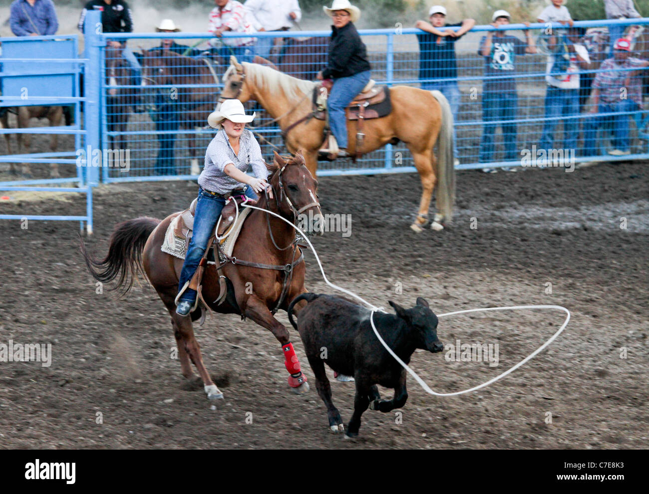 Woman competing in the breakaway event in the rodeo held on the Fort Hall reservation in Wyoming. - Stock Image