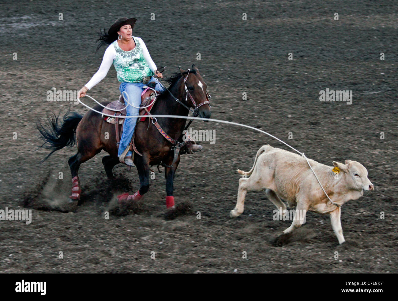 Woman competing in the breakaway event in the rodeo held on the Fort Hall reservation in Wyoming during the annual - Stock Image
