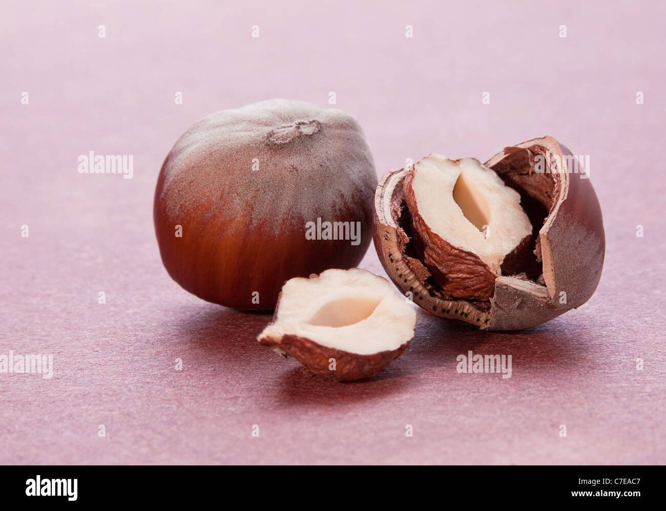 Hazelnut nut closeup with shadow on red background - Stock Image