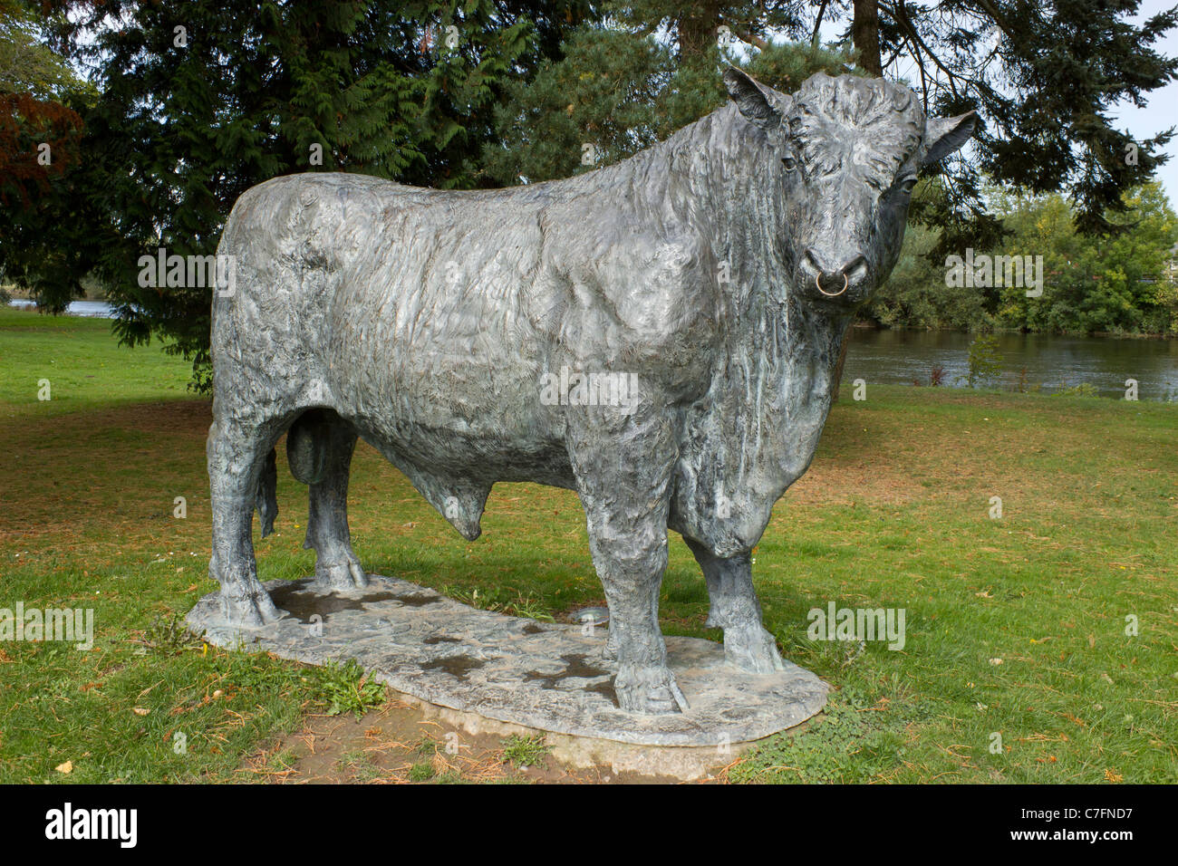 Welsh Black bull statue, Builth Wells Powys Wales UK. Stock Photo