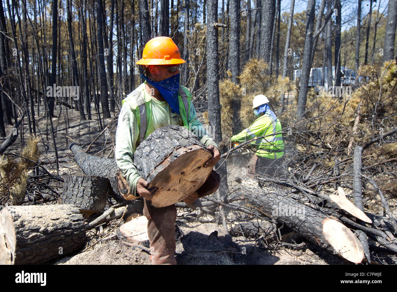 Tree removal experts working in a forested area near Bastrop Texas in the aftermath of a wildfire that burned 40,000 - Stock Image