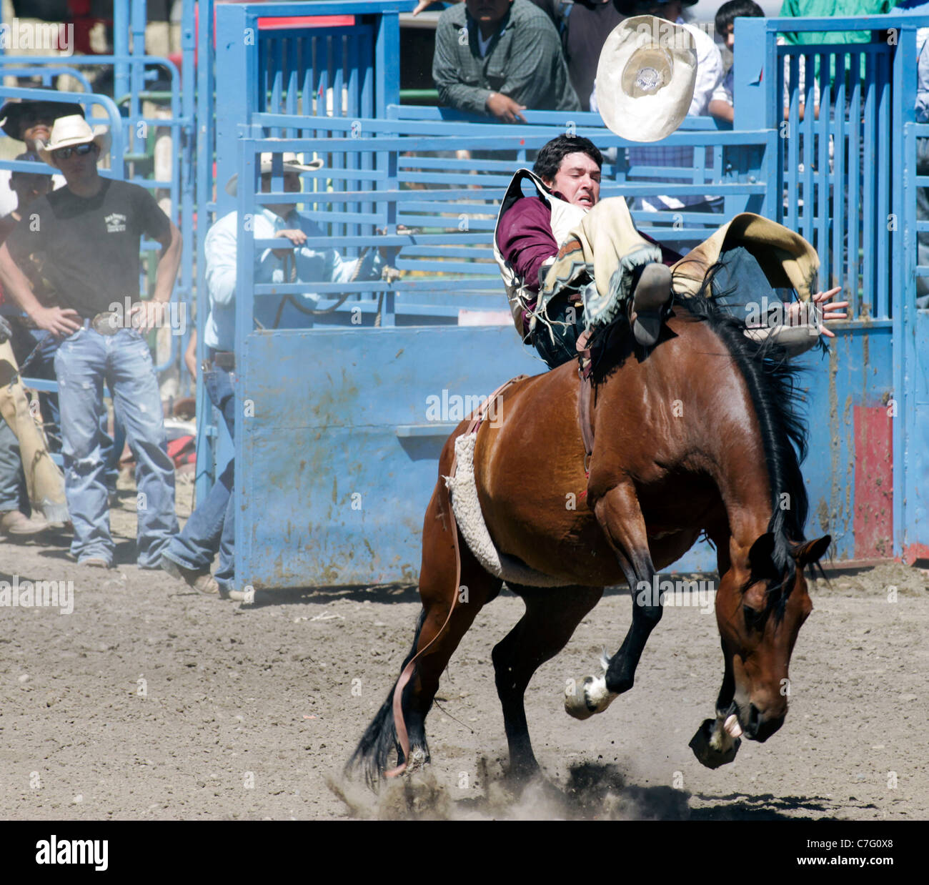 Competitor in the bronco riding event of the rodeo held on the Fort Hall reservation in Idaho - Stock Image