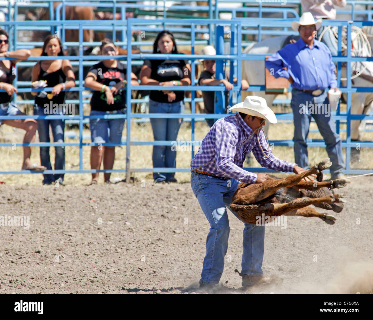 Competitor during the calf tie-down event of the rodeo held on the Fort Hall reservation in Idaho Stock Photo