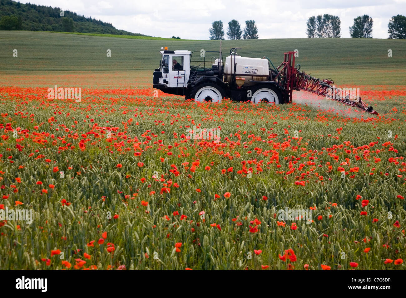 Crop spraying in July in a field of poppies in Yorkshire - Stock Image