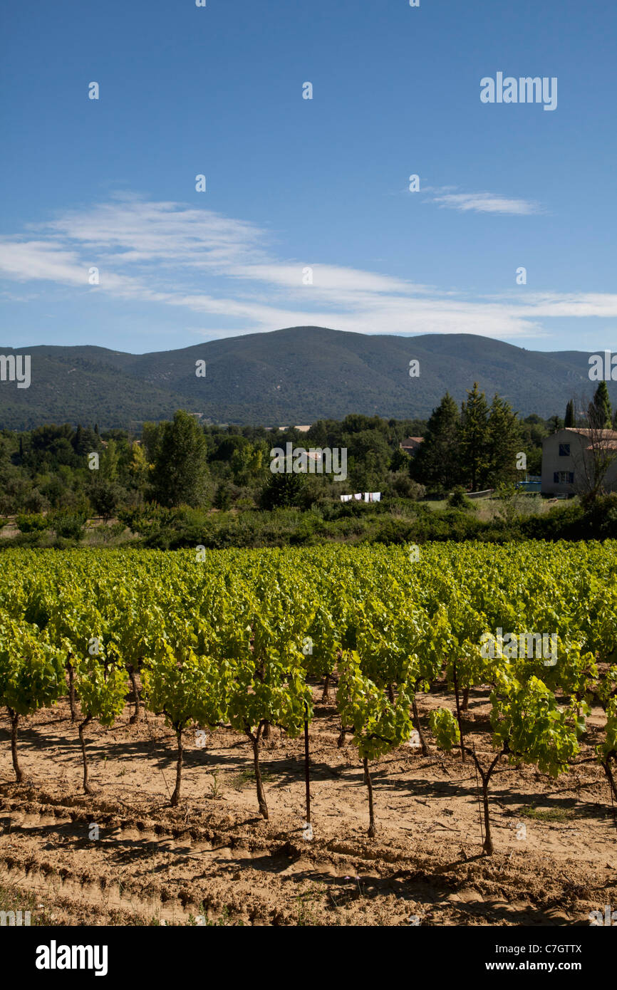 View of vineyards and mountains in a rural setting - Stock Image