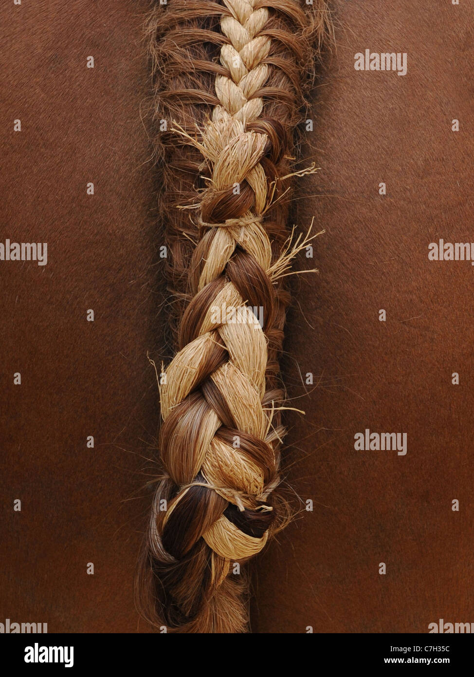 A horse's tail that has been braided and plaited by hand - Stock Image