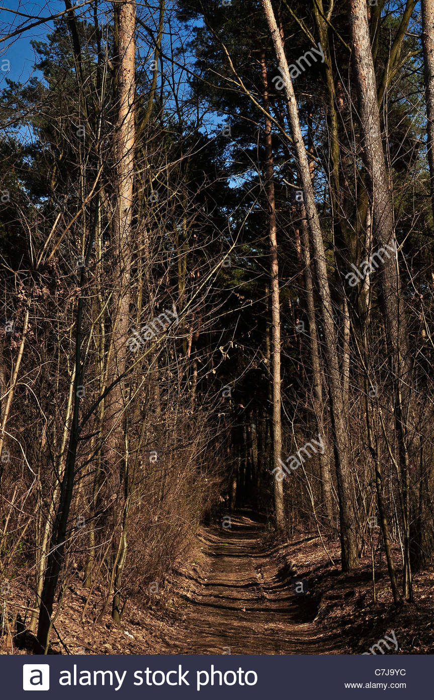 Entrance to the park of ticino, with footpath through the trees - Stock Image