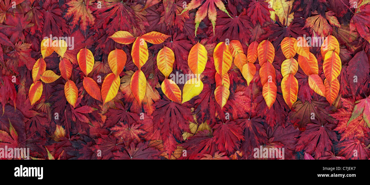Autumn leaf pattern. The word AUTUMN in leaves - Stock Image
