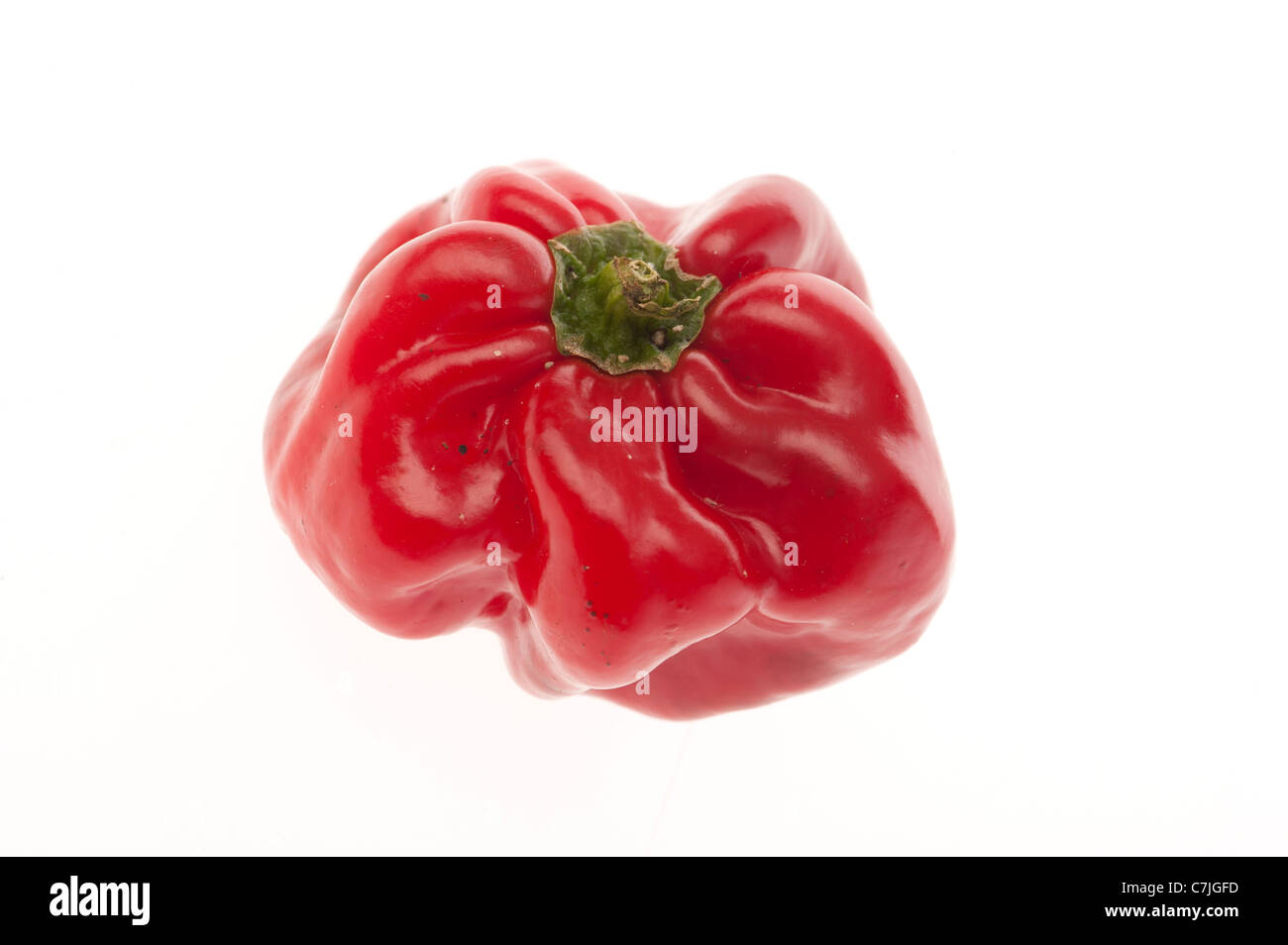 A Home produced red capiscum bell pepper on a white backlit background - Stock Image