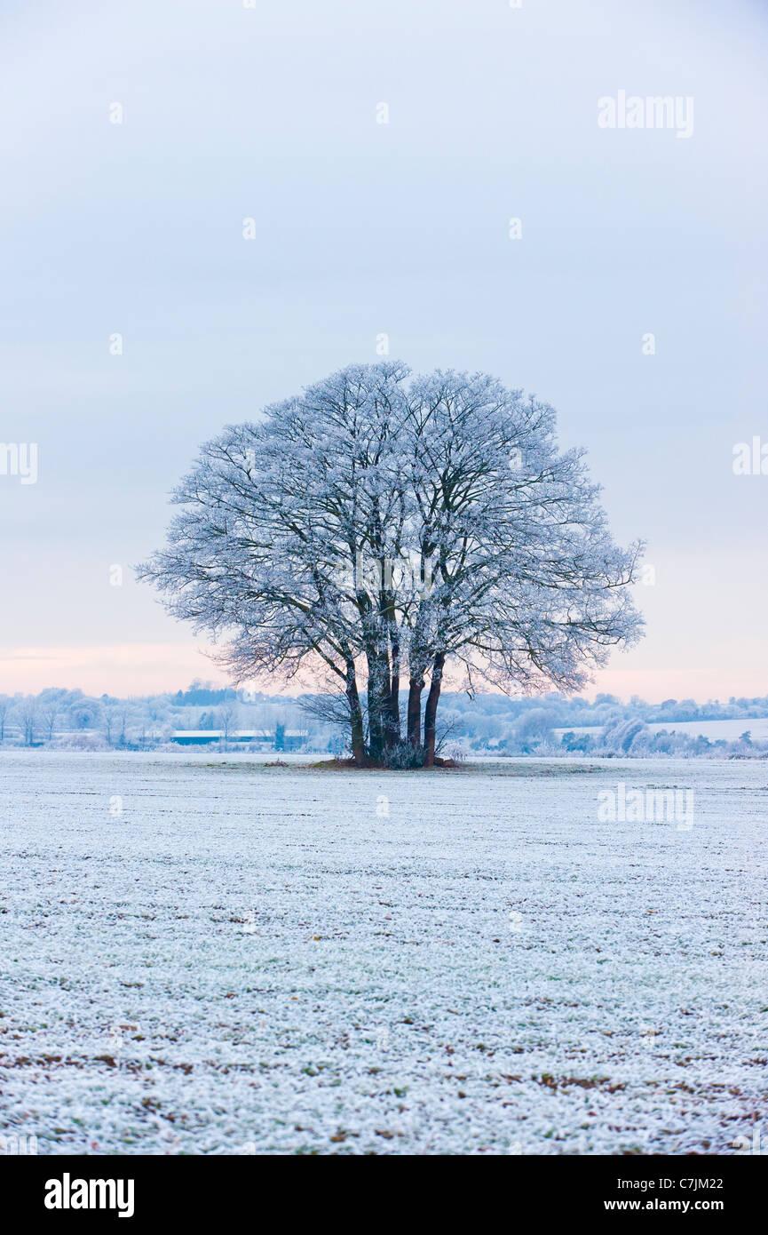 Hoar frost on tree - Stock Image