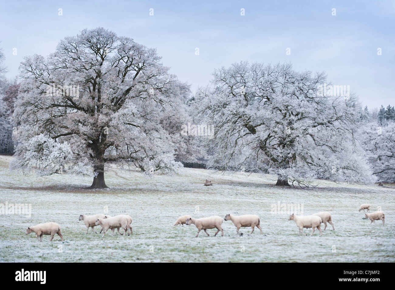 Hoar frost on trees - Stock Image