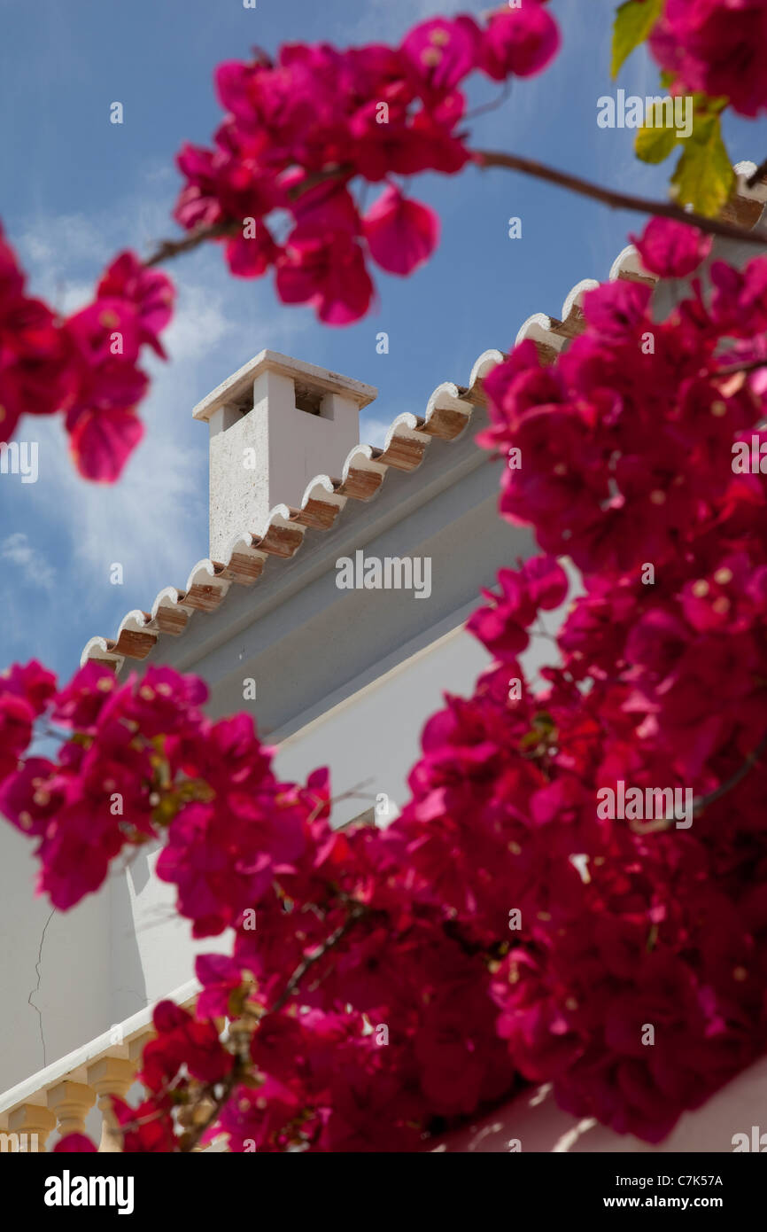 Portugal, Algarve, Albufeira, Chimney & Blossom - Stock Image